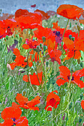David Pringle - Poppies
