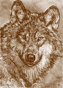 Autumn Landscape Drawings Framed Prints - Portrait of a Gray Wolf Framed Print by J McCombie