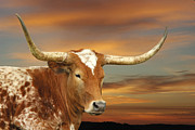 Texas Longhorns Photos - Portrait of Porter by Robert Anschutz