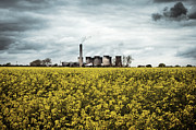 Power Plants Posters - Power station UK across a field of rapeseed Poster by Jon Boyes