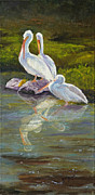 Sea Birds Paintings - Preening Pelicans by Bev Finger