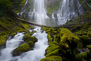 Long Bed Framed Prints - Proxy Falls Framed Print by Keith Kapple