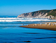 Bill Gallagher - Pt Reyes National...