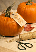 Label Prints - Pumpkins For Thanksgiving Print by Christopher and Amanda Elwell