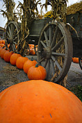 Hayride Posters - Pumpkins with Old Wagon Poster by Amy Cicconi