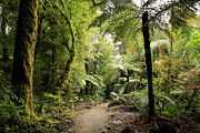 Tropical Forest Prints - Pureora Forest Print by Les Cunliffe
