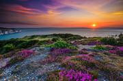 Nigel Hamer - Purple Heather Sunset