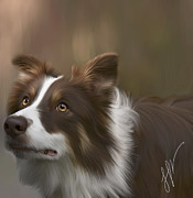 Collies Digital Art Posters - Quinn Poster by Laura Rothstein