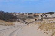 Race Point Photos - Race Point Dunes by Catherine Reusch  Daley