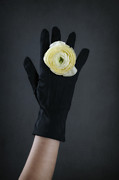 Black Ring Art - Ranunculus by Joana Kruse