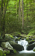 Peaceful Scene Posters - Rapids at Springtime Poster by Andrew Soundarajan