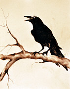 Blackbird Drawings Metal Prints - Raven 13 Metal Print by Maria Kitano