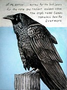Raven Drawings Originals - Raven by Darrell Ross