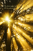 Psalms Photo Posters - Rays of Light Poster by Thomas R Fletcher