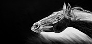 Expressionist Equine Prints - Reach Print by Renee Forth Fukumoto