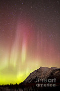 Red Aurora Borealis Over Carcross Print by Joseph Bradley