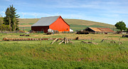 Old Shack Photos - Red barn in a farm Eastern Washington. by Gino Rigucci