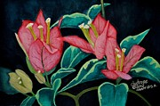 Bougainvillae Prints - Red Bougainvillae Print by Charito ChatRose Mahilum