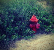 Fire Hydrants Prints - Red Fire Hydrant Print by Cathy Lindsey