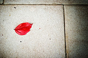 Fallen Leaf Photos - Red leaf by Silvia Ganora