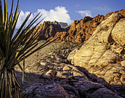 Steve Benefiel - Red Rock Canyon