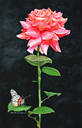 Janet Gupta - Red Rose and Butterfly