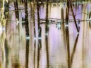 Katina Cote - Reflections