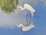 Florida Pond Prints - Reflective Pose Print by Deborah Benoit