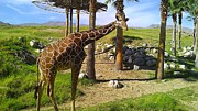 Born Adult Posters - Reticulated Giraffe Poster by Chris Tarpening