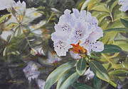 Watercolour Paintings - Rhododendron Jungle by Adel Nemeth