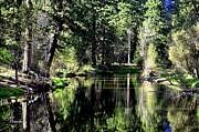 Lynn Bawden - River Reflections