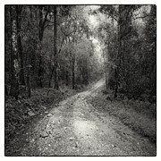 Black And White Photography Photos - Road Way In Deep Forest by Setsiri Silapasuwanchai