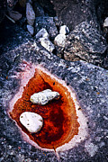 Marble Photo Prints - Rocks at Georgian Bay Print by Elena Elisseeva