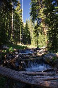 Woods Photos - Rocky Mountain summer by Michael J Bauer