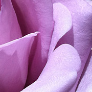 Focal Color Art Photos - Rose 2-2 B by Ann Pelaez