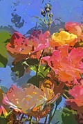 Multicolored Roses Prints - Rose 208 Print by Pamela Cooper
