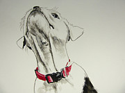 Pet Paintings - Roxy by Carol Blackhurst