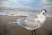 Royal Digital Art - Royal Tern by Betsy A Cutler East Coast Barrier Islands