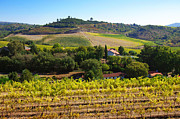Vineyard Landscape Framed Prints - Rural Landscape Framed Print by Carlos Caetano