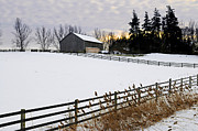 Fencing Framed Prints - Rural winter landscape Framed Print by Elena Elisseeva