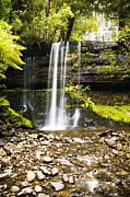 Tim Hester - Russel Falls Tasmania