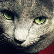 Cat Eyes Digital Art - Russian Blue by Natasha Marco