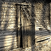 Grape Vines Art - Rustic Door by Marsha Charlebois
