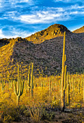 Fred J Lord - Saguaro National Park