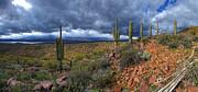 Saguaro Ridge Print by  Reid Helms