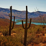 Dany Lison - Saguaros in Arizona