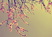 Marianna Mills Metal Prints - Sakura Metal Print by Marianna Mills