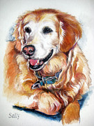 Retrievers Drawings - Sally by Laurie Hansen