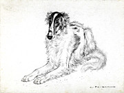 Royal Art Pastels Prints - Saluki Print by Kurt Tessmann