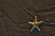 Fish Print Prints - Sand Prints and Starfish II Print by Susan Candelario